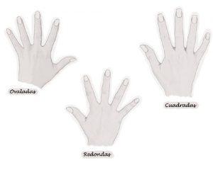 dedos cortos