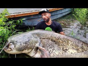 pesca siluro