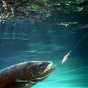 pesca trucha