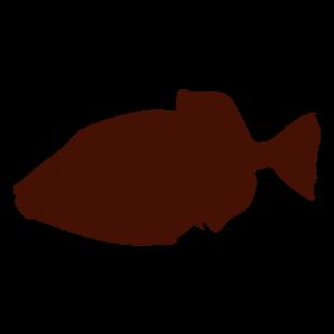 silueta pez